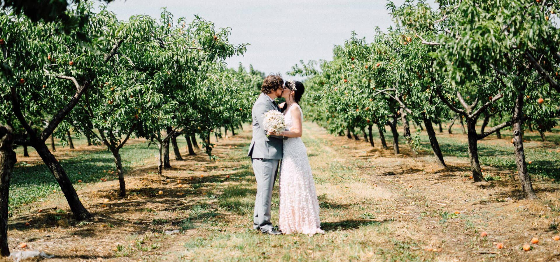 Hero image for Sam and Scott's Effortlessly Elegant Wedding at Honsberger Estate