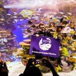 Thumbnail for Industry Night at Ripley's Aquarium of Canada