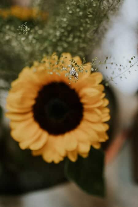 Wedding at Art Gallery of Hamilton, , Ontario, Amos Photography, 3