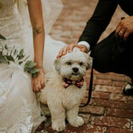Thumbnail for Cute Ways to Incorporate Your Furry Friends into Your Big Day