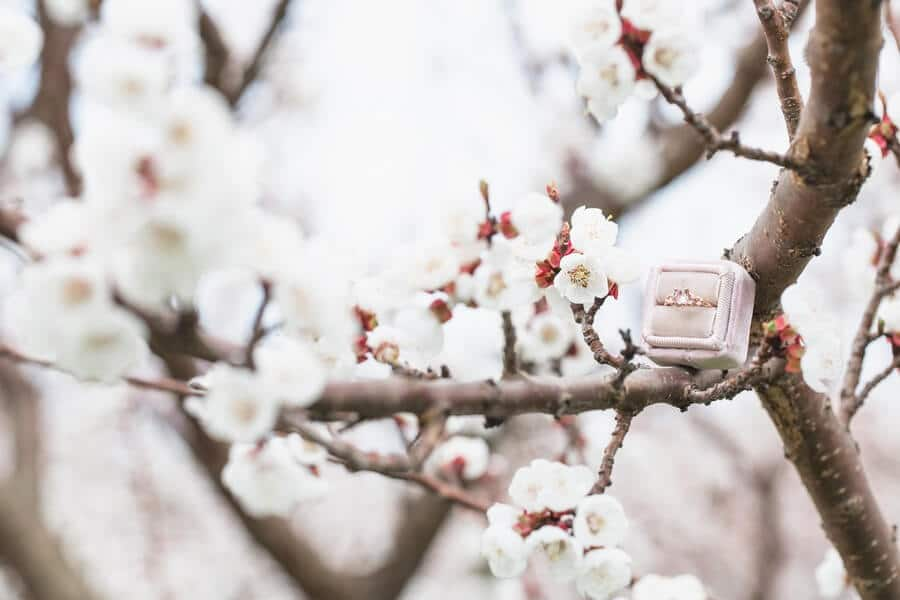 romantic earthy spring cherry blossom styled shoot, 2