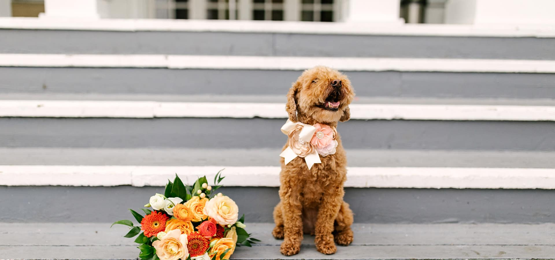 Hero image for 5 Ways to Include your Pet in Your Wedding (without actually having them there)