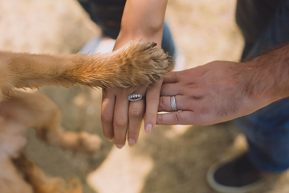 5 ways to include your pet in your wedding without actually having them there, 1