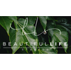 Beautiful Life Studios