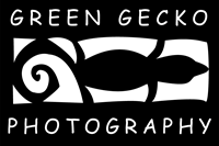 Green Gecko Photography
